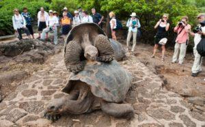 galapagos-touristes